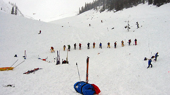 Colour photograph of 18 rescuers in search line probing the avalanche debris for victims on mountain slope.