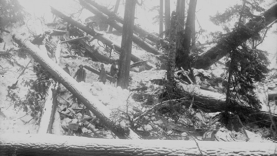 Four men pose for black and white photograph amongst huge fallen trees on mountain-side.